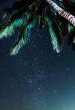 La vista del cielo notturno sotto il cocco stars la Via Lattea in Tailandia immagini stock libere da diritti