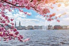 La vista del lago Alster en Hamburgo enmarcó por el cerezo floreciente en día soleado hermoso en primavera imagen de archivo