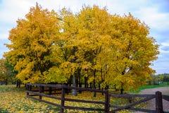 La vista del vicolo variopinto degli alberi di acero ingialliti, iluminazione pubblica alta, prato inglese verde con giallo lasci Fotografie Stock