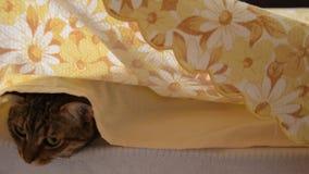 La vista delantera de la mano del ` s de la mujer aumenta las cubiertas de cama y encuentra el gato almacen de video