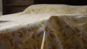 La vista delantera de la mano del ` s de la mujer aumenta las cubiertas de cama y encuentra el gato almacen de metraje de vídeo