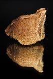 La vista delantera de un ootheca de la mantis religiosa con una reflexión duplicada aislada en un fondo negro Foto de archivo libre de regalías