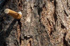 La vista delantera del primer del cigarrillo fue machacada en el árbol fotos de archivo