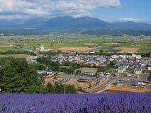 La vista della città e la lavanda sistemano sulla collina Fotografie Stock Libere da Diritti