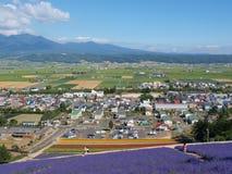 La vista della città e la lavanda sistemano sulla collina Immagine Stock
