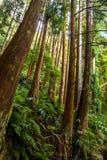 La vista della foresta pluviale dal basso verso l'alto immagini stock