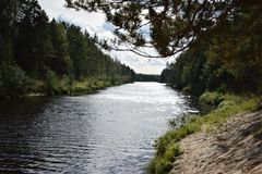 La vista della prospettiva del fiume della foresta fotografia stock