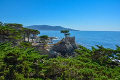 La vista delle colline del cipresso da una strada da 17 miglia nella costa di California fotografia stock libera da diritti