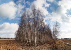 La vista delle foreste, i campi e le pianure frenano il polacco Immagini Stock