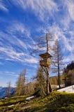 La vista delle montagne delle alpi e la foresta del pino balzano in parco nazionale Hohe Tauern, Austria Fotografie Stock