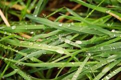 La vista detallada de las cuchillas de la hierba con agua cae después de lluvia Fotos de archivo