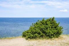 La vista di bello vede il paesaggio in Saaremaa, Estonia fotografie stock libere da diritti