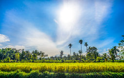 La vista di farmfield con Ready ha raccolto la risaia Fotografie Stock Libere da Diritti