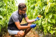 La vista di giovane funzionamento dell'uomo dell'agricoltore di affari e raccoglie l'ha Fotografia Stock