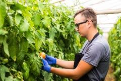 La vista di giovane funzionamento dell'uomo dell'agricoltore di affari e raccoglie l'ha Immagini Stock Libere da Diritti