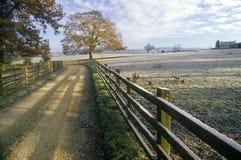 La vista di mattina di una strada campestre ed il legno recintano gli imbrogli superiori, Inghilterra immagine stock libera da diritti