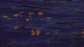 La vista di molti fiori gialli sviluppati ondeggia sotto la chiara acqua del fiume Albero nel campo nave Gambi verdi archivi video