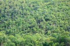 La vista di più forrest verde sul fianco di una montagna Immagini Stock Libere da Diritti