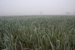 La vista di rozen l'erba sul prato Immagini Stock Libere da Diritti