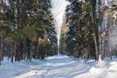 La vista di un percorso innevato e gli alberi in un inverno parcheggiano Immagine Stock