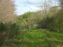 La vista di una pista/natura abbandonate si riafferma Fotografia Stock Libera da Diritti