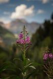 La vista dietro il fiore Fotografia Stock