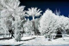 La vista infrarossa del foilage e degli alberi sparati con il nanometro 665 ha convertito la macchina fotografica dedicata fotografia stock
