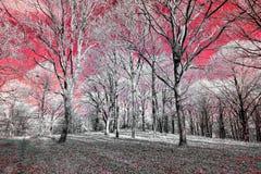 La vista infrarossa del foilage e degli alberi sparati con il nanometro 665 ha convertito la macchina fotografica dedicata fotografia stock libera da diritti