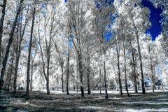 La vista infrarossa del foilage e degli alberi sparati con il nanometro 665 ha convertito la macchina fotografica dedicata immagini stock libere da diritti