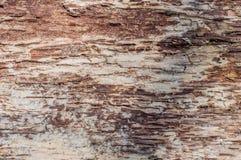 La vista laterale posteriore di struttura della corteccia di albero Fotografia Stock Libera da Diritti