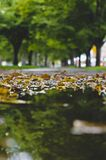 La vista lunga di una pozza della pioggia sul marciapiede ha riempito di foglie fotografia stock libera da diritti
