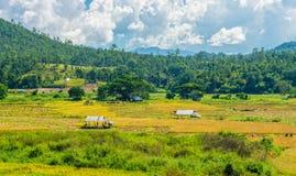 La vista naturale del paesaggio della risaia Fotografia Stock Libera da Diritti