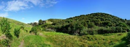 La vista panoramica dell'albero ha coperto le colline Immagini Stock