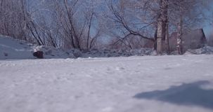 La vista a?rea de la helada blanca en un ?rbol congelado remata en campo vuelo sobre la copa 4K almacen de metraje de vídeo