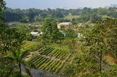 La vista sopra gli orti e la città dalla cresta del sud camminano fotografie stock libere da diritti