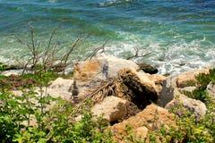 La vista sul mare dettaglia le rocce ed i fiori Fotografia Stock Libera da Diritti
