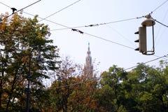 La vista sul parco con i cavi di telefono sulla priorità alta nel giorno soleggiato Fotografia Stock