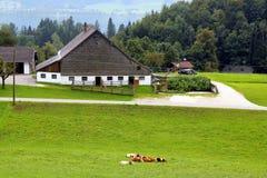 La vista sul prato verde con le mucche, con le case, un lago e le montagne sui precedenti Immagini Stock