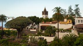 La vista sulla dracena delle Canarie in Parque del Drago in Tenerife, Spagna Immagine Stock Libera da Diritti