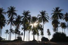 La vista sulle palme sulla spiaggia alla luce solare Fotografia Stock