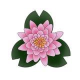 La vista superior de un loto/de una flor rosados de Lilly con verde se va en un fondo blanco Imagenes de archivo