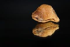 La vista superior de un ootheca de la mantis religiosa con una reflexión duplicada aislada en un fondo negro Fotos de archivo