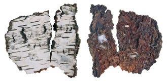 La vista superior e inferior de un fragmento de la corteza putrefacta del árbol de abedul con una colonia de liquen creciente del fotografía de archivo libre de regalías
