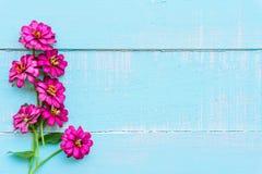La vista superiore del rosa fa doppio clic sul fiore dell'universo immagine stock