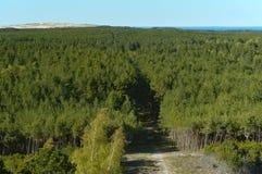 La vista superiore della foresta di conifere verde, vista superiore sull'albero incorona Fotografia Stock