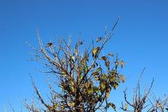 La vista superiore ha sparato per i rami dell'albero nella stagione di autunno Fotografie Stock