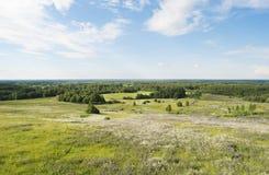 La vista superiore su un campo sbocciante di estate Fotografia Stock Libera da Diritti