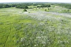 La vista superiore su un campo sbocciante di estate Fotografie Stock