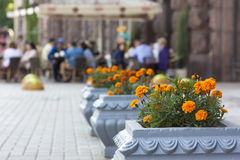 La vista vaga del caffè della via con il vaso fiorisce nella parte anteriore immagini stock libere da diritti