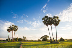 La vita del Lao Fotografie Stock Libere da Diritti